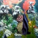 Океанариум в Адлере открыт в 2009 году.