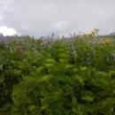 Экскурсии в горы Абхазии.