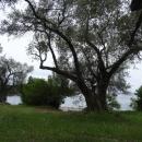 Оливковые рощи – неотъемлемый пейзаж пляжа Жаница.