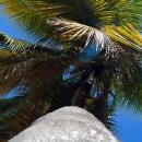 Пляж курортной зоны Пунта-Кана. Доминикана.