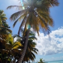 Пальма Кана. Пляж Баваро. Доминикана.