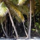 Пальмовый рай острова Саона. Доминикана.