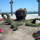 Набережная Анапы украшена цветочными композициями.