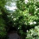 Ухоженный сад на Даче Чехова.