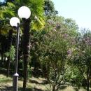 Вечноцветущий парк Цандрипша. Абхазия.