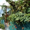 Поселок Цандрипш в Абхазии.