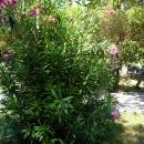 Цветущий оазис Цандрипш Абхазия.