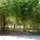 Бамбук в Цандрипше.
