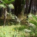 Парковая территория Цандрипш Абхазия.