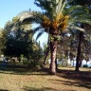 Парк-дендрарий Цандрипш Абхазия.