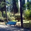 Парк дом отдыха Псоу Цандрипш Абхазия.