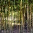 Бамбуковая роща дом отдыха Псоу Цандрипш.