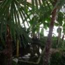 Вид зимнего сада дома отдыха Псоу Цандрипш Абхазия.