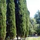 Кипарисовая аллея дома отдыха Псоу Цандрипш.