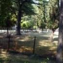 Козочки в парке дом отдыха Псоу Цандрипш Абхазия.
