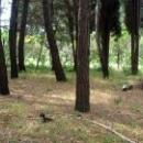 Белки в парке пансионата Псоу Цандрипш Абхазия.