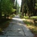 Кипарисовая аллея пос. Цандрыпш. Абхазия.