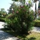 П. Цандрыпш. Природа дом отдыха Псоу Абхазия.
