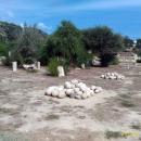 Зеленые зоны Карфагена в Тунисе.