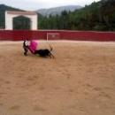 Бескровная Коррида в Испании - шоу с быком