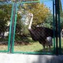 Вольер страусов. Верхний парк Дендрарий в Сочи.