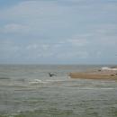 Бакланы и сайки - морские охотники на Косе Долгой.