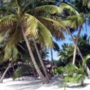 Отдых в Доминикане. Белоснежные пляжи и пальмы.