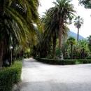 Старинный парк в Гагре. Абхазия.