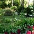 Цветники Ботанического сада. Сухум.