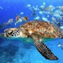 Подводный мир Красного моря в Египте