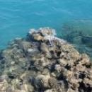 Каралловые рифы в Египте.