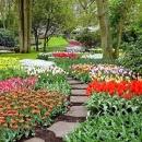 Голландия парк цветов Кененхоф