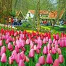 Голландия страна тюльпанов