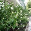 Гурзуфский парк - место, где растут экзотические и местные растения.