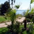 Природа Гурзуфа отдых в Крыму