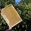 Мед в сотах. Экскурсия за медом в Красную Поляну.