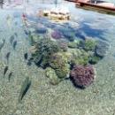 Морской парк на курорте Эйлат в Израиле.