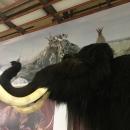 Скульптура мамонта в музее «Костёнки».