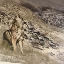 Животные ледниковой эпохи в музее «Костёнки».