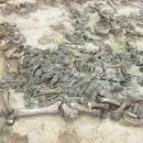 Кости мамонтов в музее «Костёнки». Стоянка Костёнки 11.