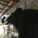 Таксидермическая скульптура мамонта в музее-заповеднике «Костёнки».