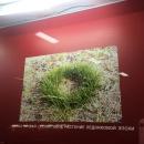 Растения ледниковой эпохи. Музей «Костёнки».