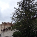 Княжеский дворец (XVII-XVIII) в Которе.