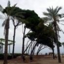 La Pineda средиземноморские сосны