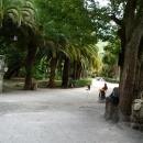 Аллеи Приморского парка в Гагре. Абхазия.