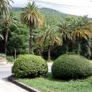 Природа курорта Гагра. Абхазия.