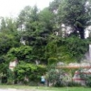 Ландшафтный парк Массандровского дворца.