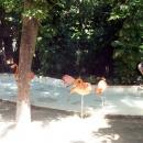 Фламинго в Мексике.