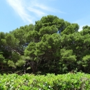 На курорте Милочер на территории в 18 гектар разбит огромный сад-парк во французском стиле.