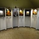 Экспозиция в музее янтаря в Калининграде.
